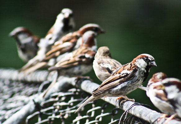 Птицы во сне