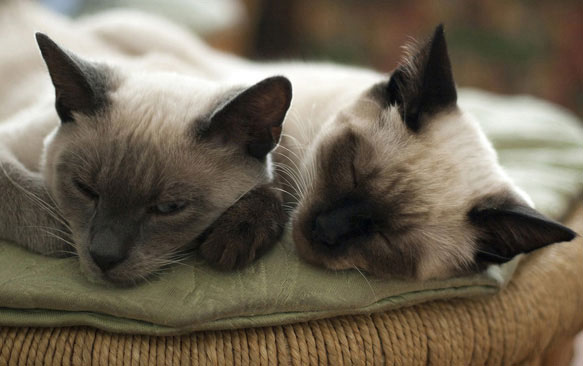 Звуки котов для сна