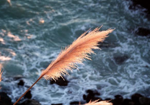снится ветер