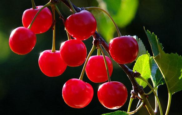 снится ягода