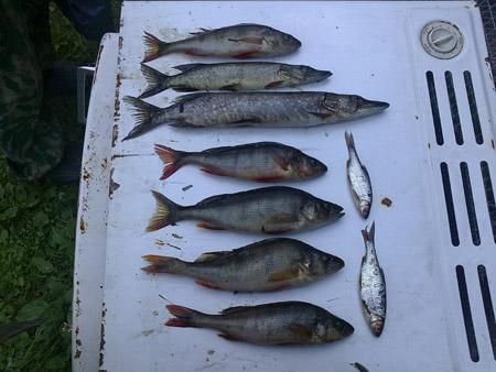 рыба из озер в лоухи
