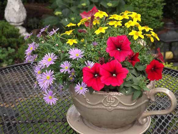 Биоритмы растений. Цветочные часы