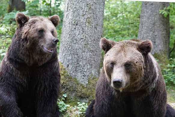 Фото Видеть во сне мертвого медведя