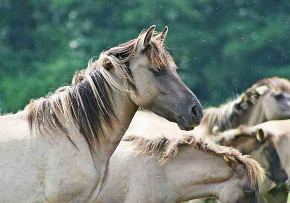 снится белая лошадь