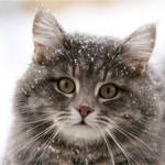 К чему снится Кот во сне: по 9 сонникам! Если видишь