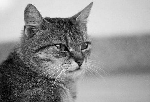 Снится кот который ушел из дома