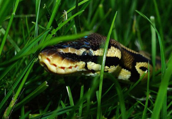 змея залезла между ног