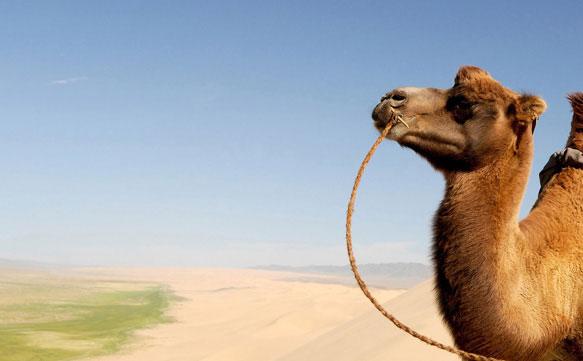 Одеяло из верблюжьей шерсти отзывы и рекомендации