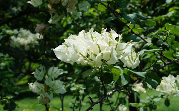 Во сне цветы белые