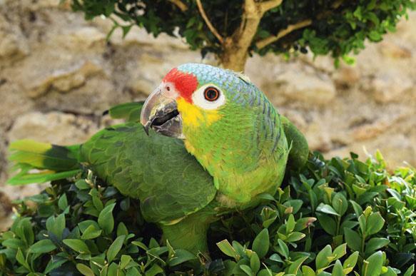Видеть во сне попугая