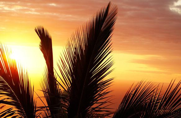 Сновидения-о-слепой-любви-пальма