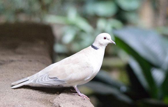 снятся белые голуби во сне