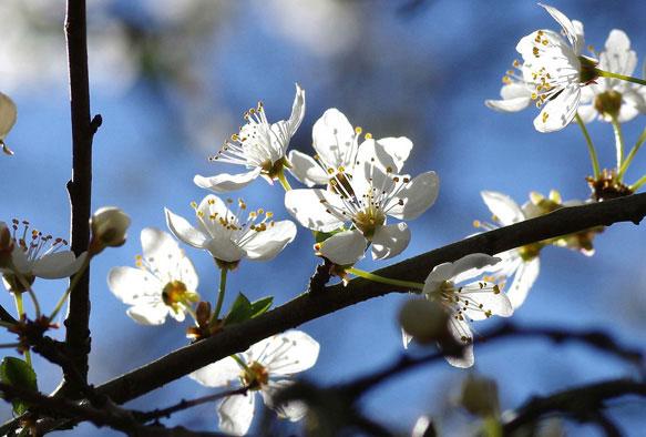 снится весна