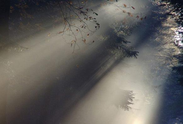снится туман