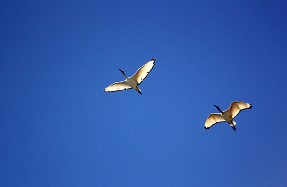 снятся птицы