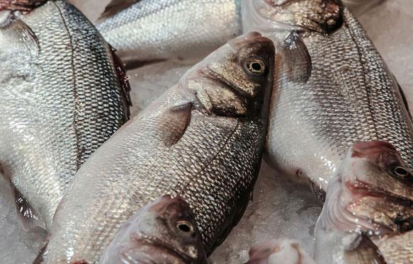 снится свежая рыба