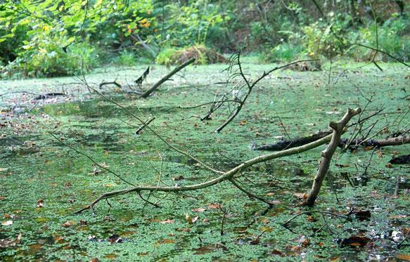 снится болото