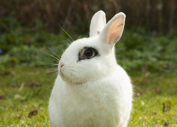снится белый кролик