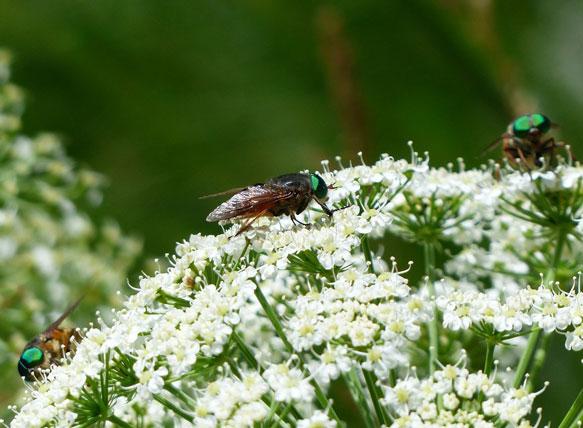 насекомые снятся