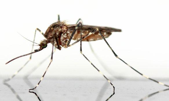 снится комар