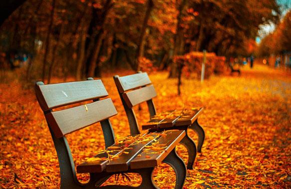 снится осень