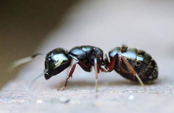 если снятся и муравьи пчелы