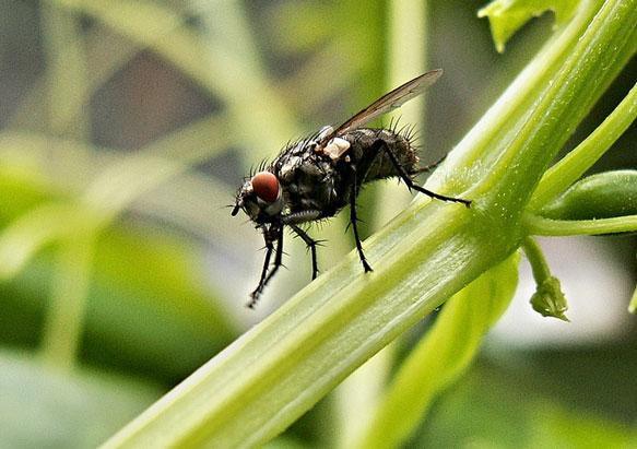 К чему снятся мухи на потолке фото