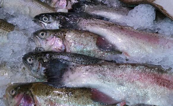 К чему сниться рыба во сне девушке