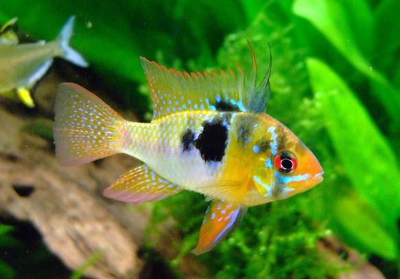 к чему снятся аквариумные рыбки