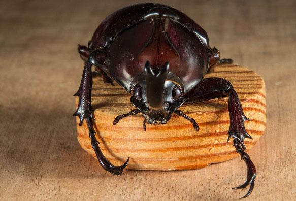 Фото К чему снятся жуки на полу