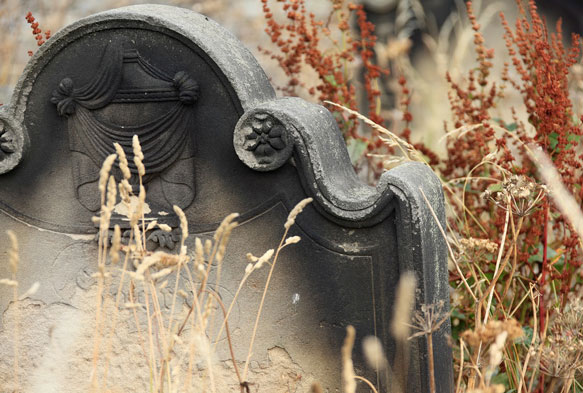 К чему сниться могила в цветах
