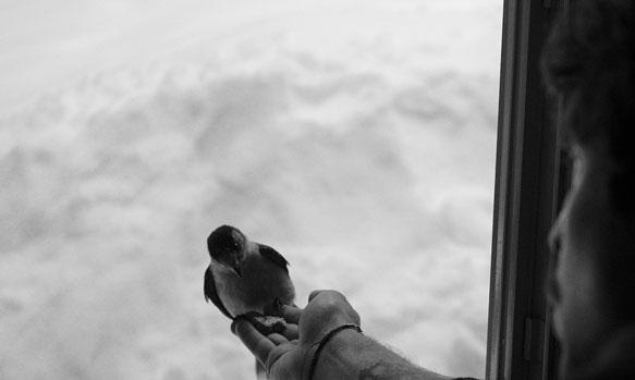 к чему снится птица залетевшая в окно