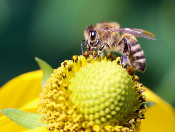 Чему пчелы голову снятся к покусавшие