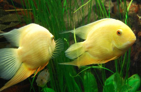 видеть во сне аквариум