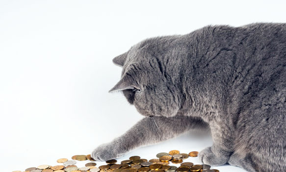 К чему снится деньги считать их