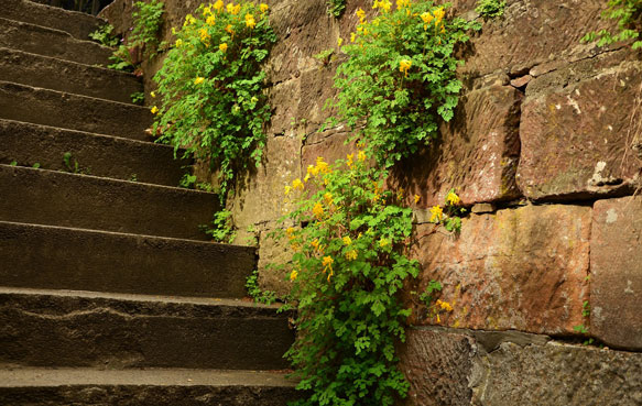 подниматься по лестнице вверх во сне