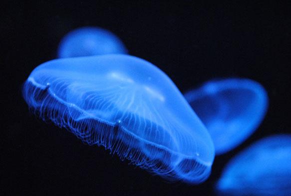 видеть во сне медузу