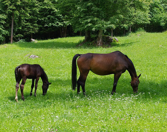 В статье пойдет речь о том, к чему снится лошадь и как правильно истолковать такое сновидение.