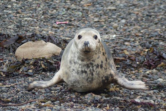 Содержание6 сонник: морской котик к чему снится7 сонник тюленьважно отличить его от тюленя, потому что тюлень, при некоторой схожести.однако будьте спокойны, сон предрекает вам быстрое устранение инцидента и возвращение дел в прежнее русло.